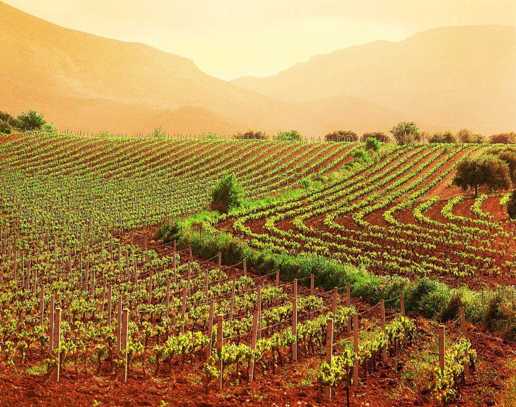 Piccola proprietà contadina: agevolazioni acquisto fondi