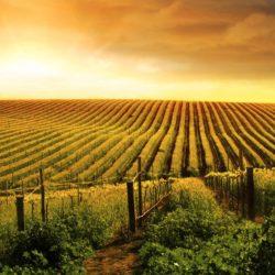 ravvedimento imu terreni agricoli
