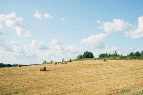 Rendita catastale per terreni agricoli come si calcola - Calcola imposta di registro ...